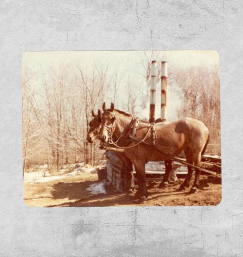 Two horses pulling the family sled